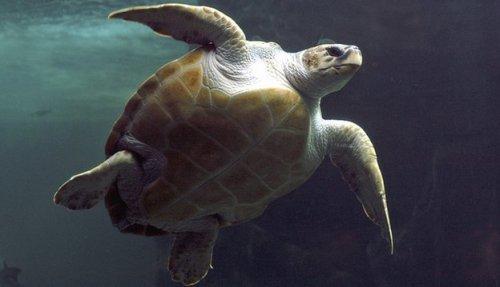_65902614_turtle_bbc