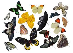 Butterflies. Credit: © andrey7777777